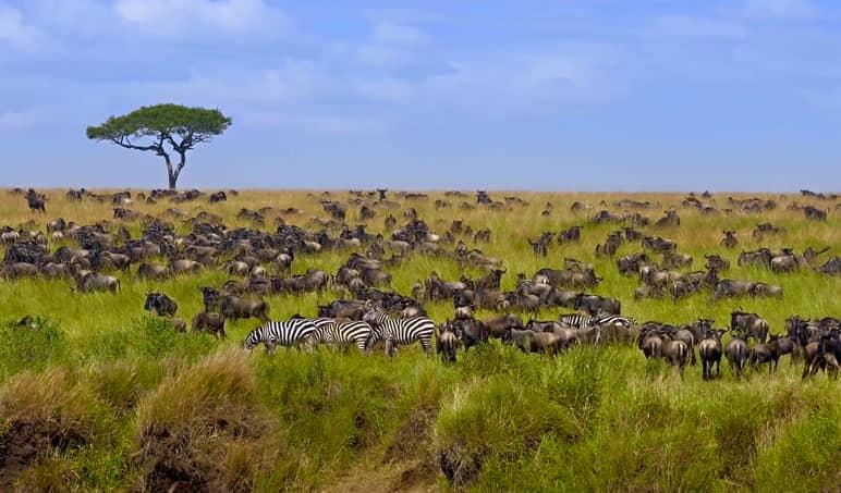 Tanzania. Masai Mara National Park hot air balloon